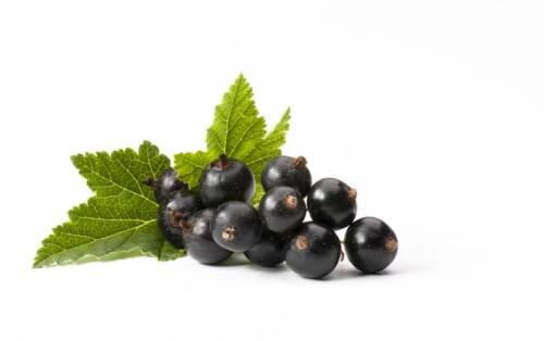 Black Currant Fruit Powder spray dried, 3-5:1