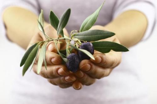Olive Polyphenol Extract min. 6 % Hydroxytyrosol