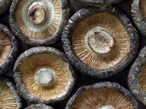 Shiitake Extrakt min. 24% Polysaccharide sprüh getrocknet