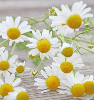 Chamomile Flower Extract 10:1, water soluble