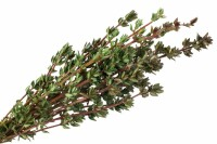 Thyme Extract 5:1, extr. solvent water, ws