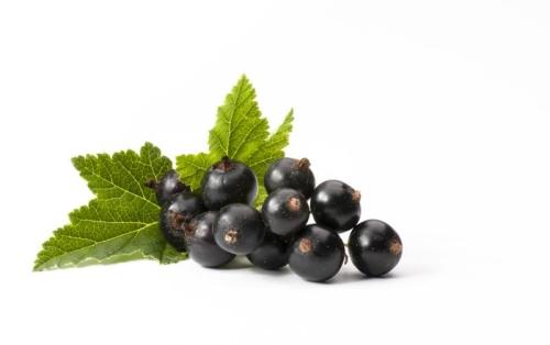 Black Currant Powder organic, rollerdried, ca. 60 %