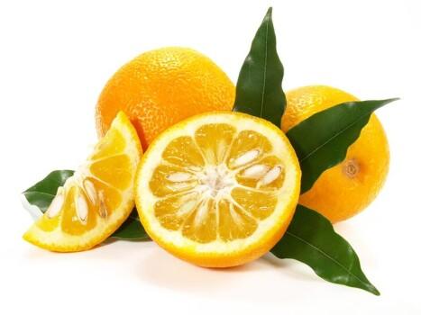 Citrus Aurantium Extrakt 6 % Synephrine
