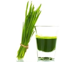 Wheat Grass Extract 10:1, Powder
