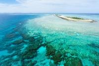 Sango Koralle Pulver, min. 20% Calcium, min. 10% Magnesium