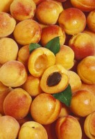 Aprikosen Pulver BIO, walzengetrocknet
