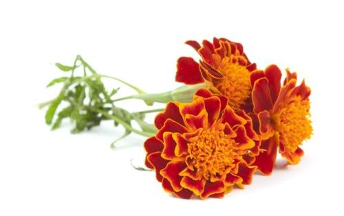 FloraGLO® Lutein 20 % SAF Oel