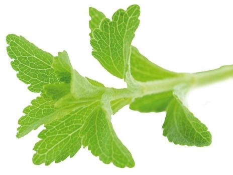 Rebaudiosid A, extra pure E960, min. 99%, ex Stevia,