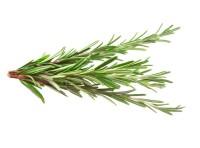 Rosemary Extract organic, min. 4% Carnosic Acid