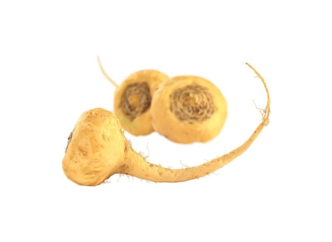 Maca Root Extract 10 : 1, spray dried