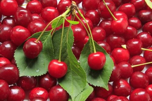 Tart Cherry Extract 10:1, water extracted