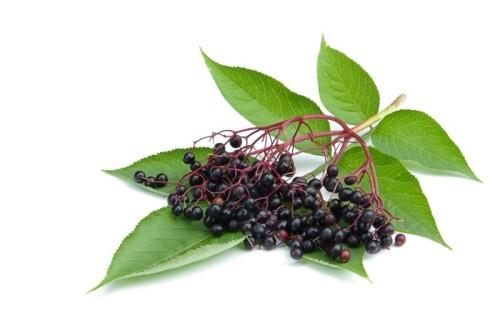 Elderberry Powder organic, roller dried