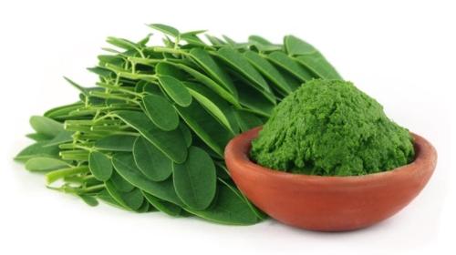 Moringa Leaf Extract min. 20 % Protein