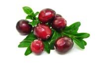 Cranberry Protein Pulver ~ 24 % Protein
