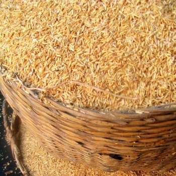 Reis Protein aus Vollreis, 80 - 90 % Protein, ~ 300 µm