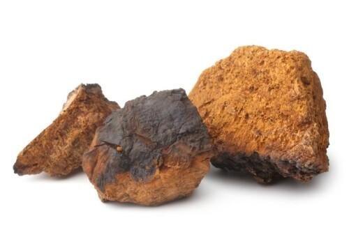 Chaga Pilz Extrakt min. 10 % Polysaccharide