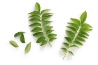 FerroPlant® Curry Leaf Extract Min. 3 % ferrous...