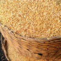 Rice Protein min. 79%