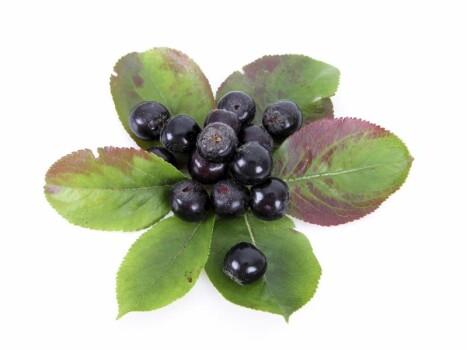 Aronia Fruit Extract Powder stand. min. 0.34 % Anthocyanins