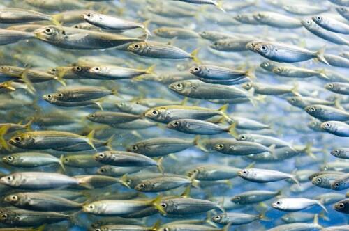 Fisch Kollagen Peptide min. 94 % Protein, granuliert
